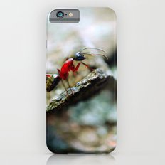 Ant Insect Photography, Nature, Macro, Home Decor iPhone 6s Slim Case