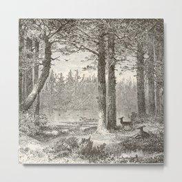 Forest Scene Metal Print
