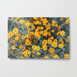 Little Orange Flowers Metal Print