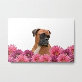 Boxer with pink Gerbera Flowers Metal Print