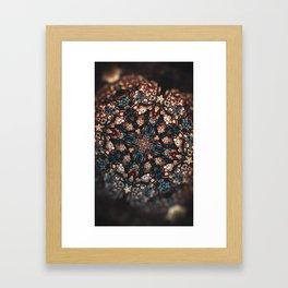 Shedding Shells Framed Art Print