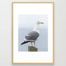 Western Gull Framed Art Print