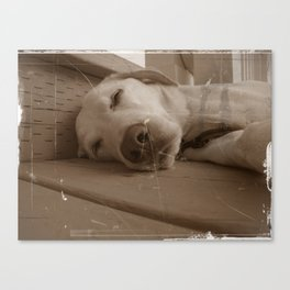 Willy the Dog Canvas Print