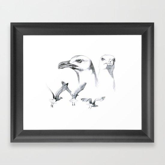 Great Black-backed Gull - Larus marinus   SK043 Framed Art Print
