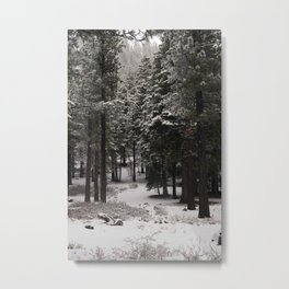 Carol Highsmith - Snow Covered Trees Metal Print
