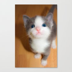 Grey and White Blue-Eyed Kitten Canvas Print