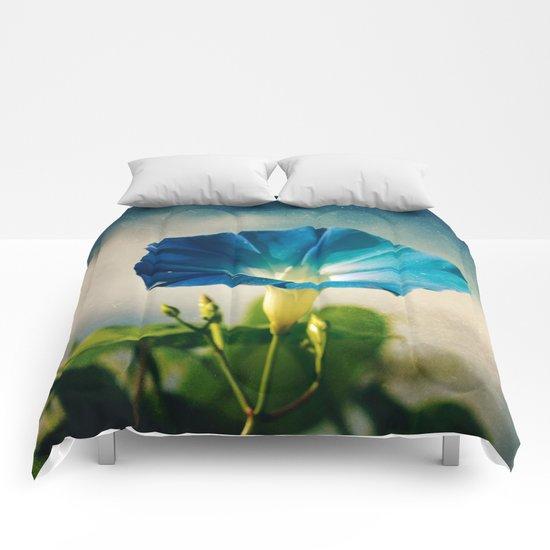 Hello Morning Glory Comforters