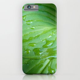 Water Drops on Green Leaves iPhone Case