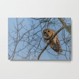 End of day Barred Owl Metal Print
