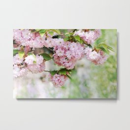 Beautiful cherry blossoming Metal Print