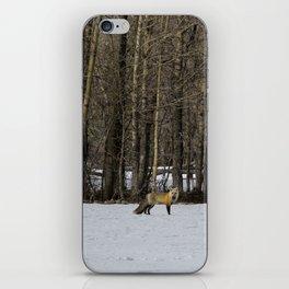 Beautiful Red Fox, No. 1 iPhone Skin