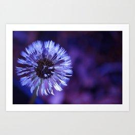 Violet Dandelion Art Print
