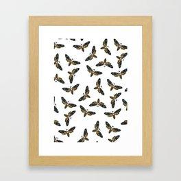 Butter Moth Framed Art Print