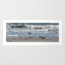 seagull play Art Print