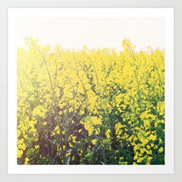 Yellow Raps Field Art Print