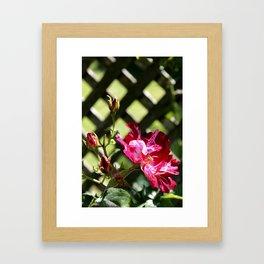 Rose No.5 Framed Art Print