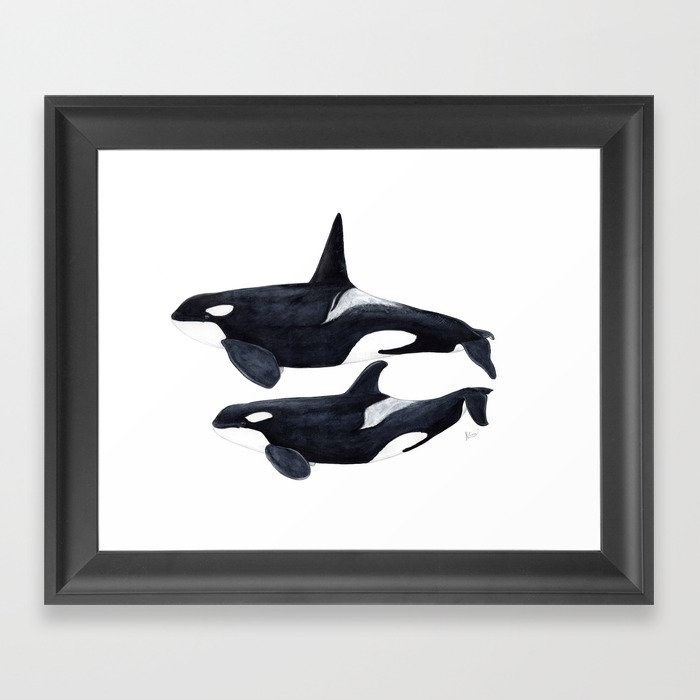 Orca male and female Gerahmter Kunstdruck
