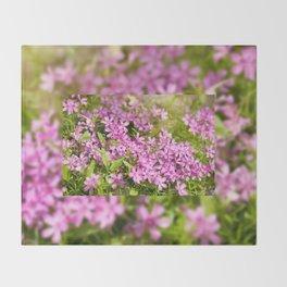 Phlox subulata pink flowering Throw Blanket