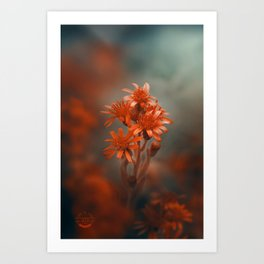 bright mornings Art Print