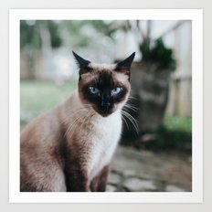 Blue-eyed Cat Art Print