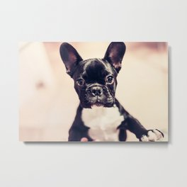 Terrier Dog Metal Print