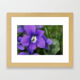 Violets Are Not Blue Framed Art Print