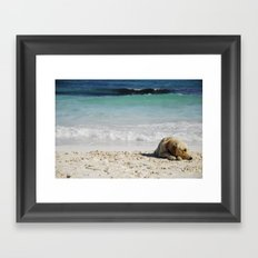 beach dog Framed Art Print