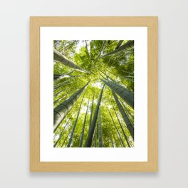 Bamboo forest in Japan Framed Art Print