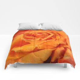 Tangerine Rose Comforters