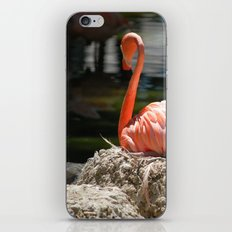 Sitting Flamingo iPhone & iPod Skin