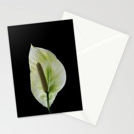 Peace Lily on Black #1 #floral #decor #art #society6 Stationery Cards