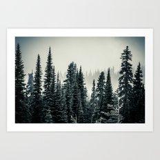 Evergreens at Mount Rainier National Park Art Print