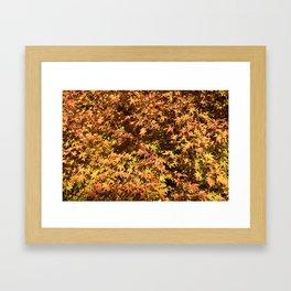 Japanese Maple Fall Leaves Framed Art Print