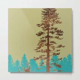 doug fir Metal Print
