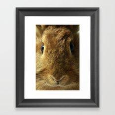 Little Rabbit. Framed Art Print