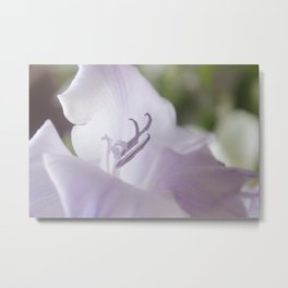 flora . gladiolus ,  gladiola Metal Print