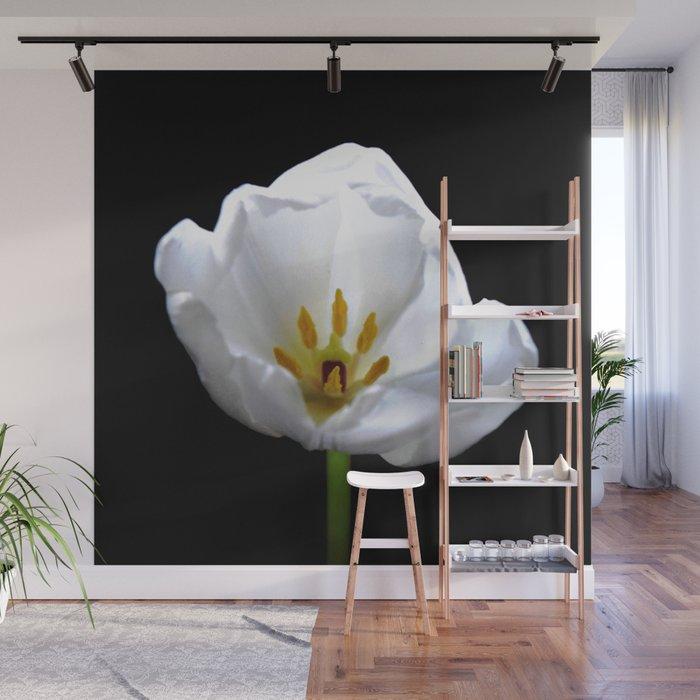 Inside A White Tulip On Black Wall Mural
