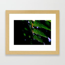 Midnight Luster Framed Art Print