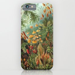 Vintage Print - Haeckel - Art Forms of Nature (1904): Muscinae / Bryophyta / Mosses iPhone Case