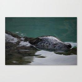 Seals, the seas best friend Canvas Print