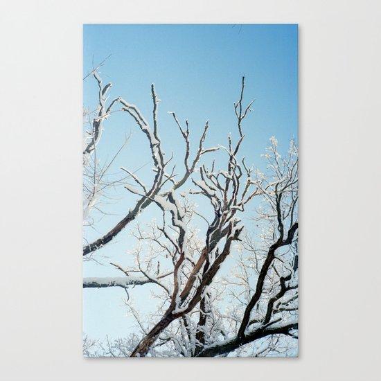 February II Canvas Print