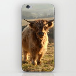 Young Highland Cow iPhone Skin