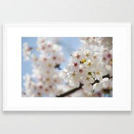 Cherry Blossom Joy Framed Art Print