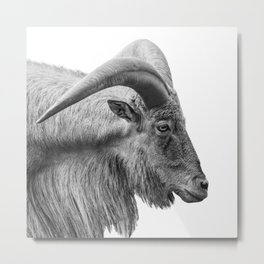 Minimalism Animal Photography   Mountain Goat   Black and White Minimal Art Metal Print