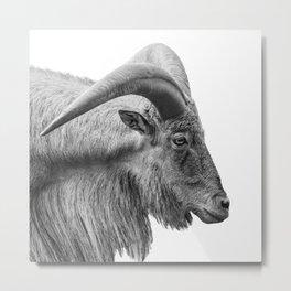 Minimalism Animal Photography | Mountain Goat | Black and White Minimal Art Metal Print