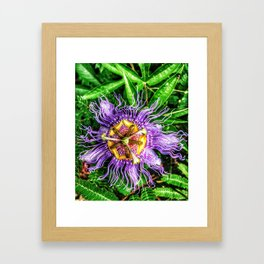 Passiflora incarnata Framed Art Print