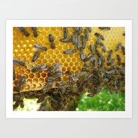 Honey Frame Art Print