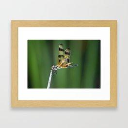 Orange Dragon Fly Framed Art Print