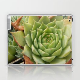 Hens and Chicks Plant Laptop & iPad Skin