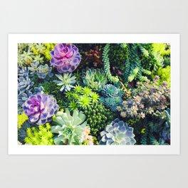 Beautiful Colorful Succulent Plant Garden Art Print